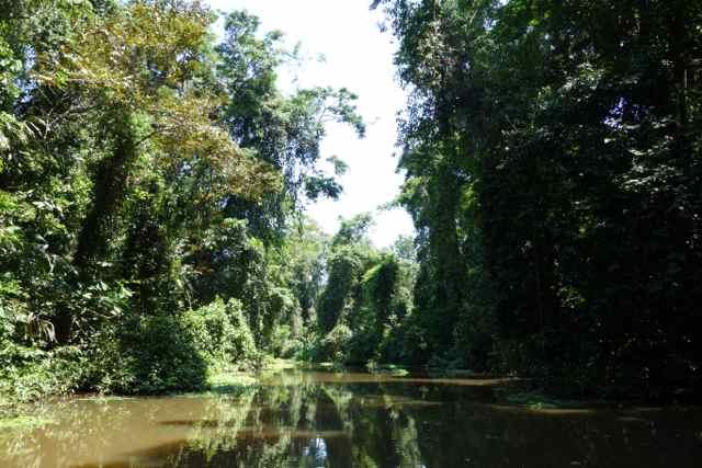 Zentralamerika, Costa Rica, Tortuguero National Park