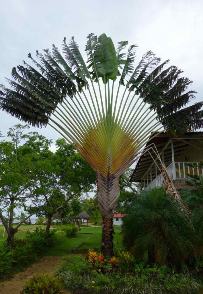 Bocas del Toro, Mit dem Bus von Colon in den Norden…