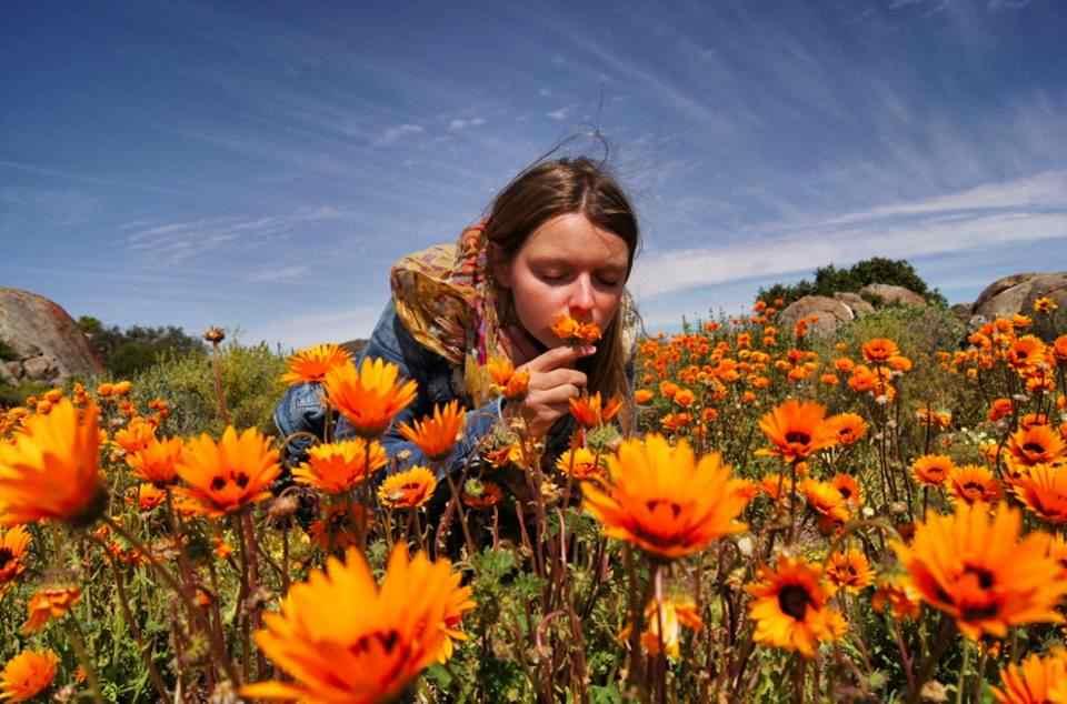 Christine Neder, Südafrika im Blumenfeld