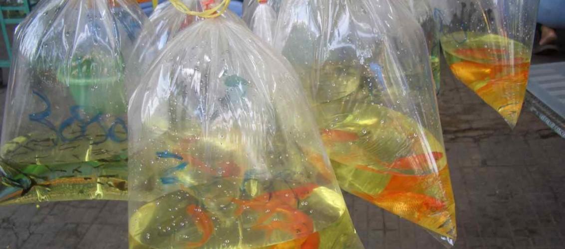 Kambodscha, Fische im Straßenverkauf