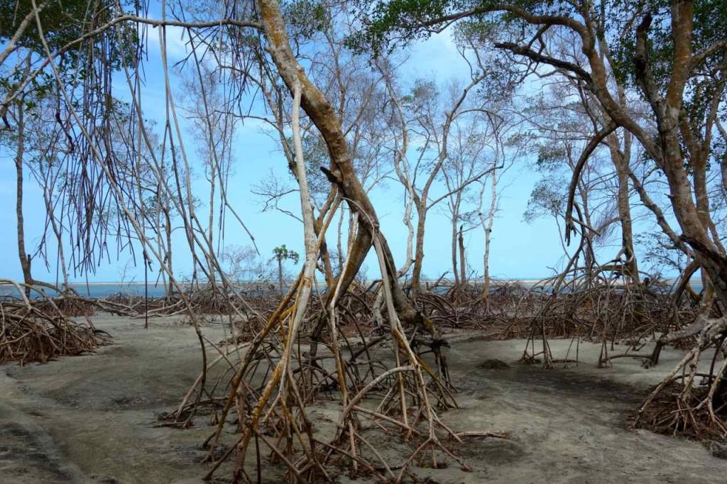Mangroven vor Tatajuba