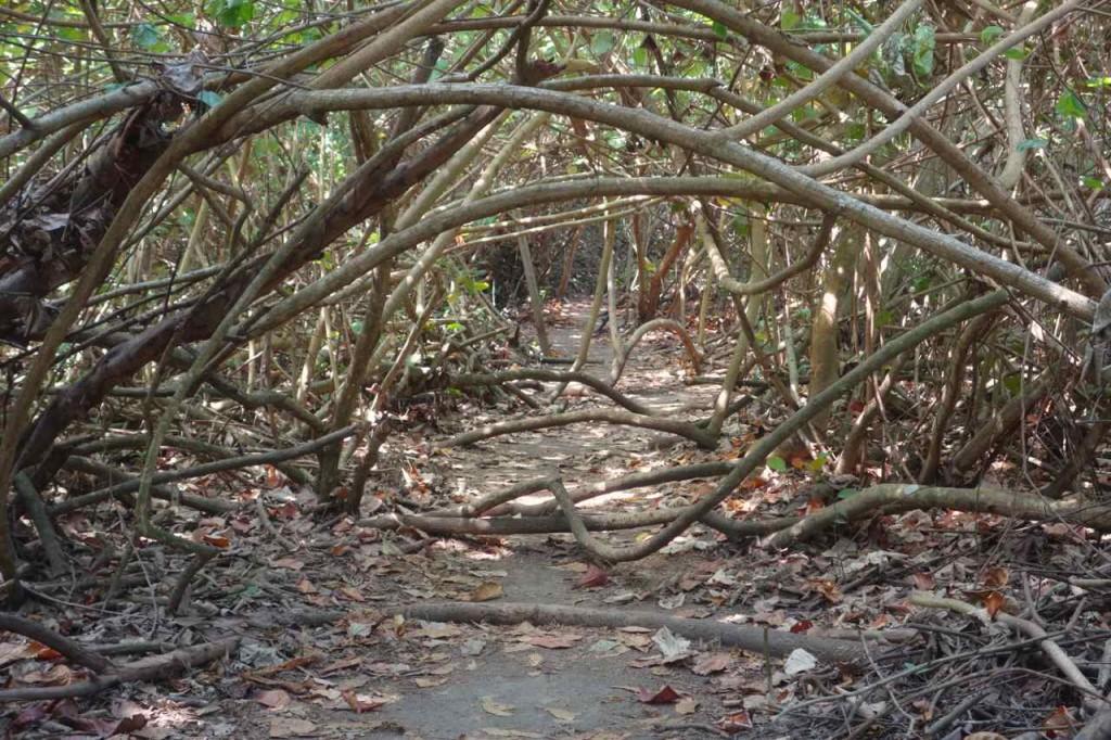 Parque Tayrona, Die Bäume versuchen ihr Terrain zurückzuerobern...