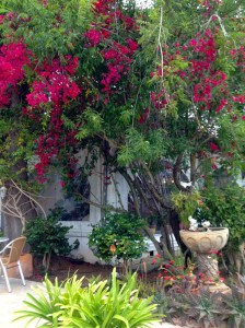 Ibiza, Garten vom La Paloma