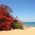 Malawi, Likoma, Mango Drift, Bar