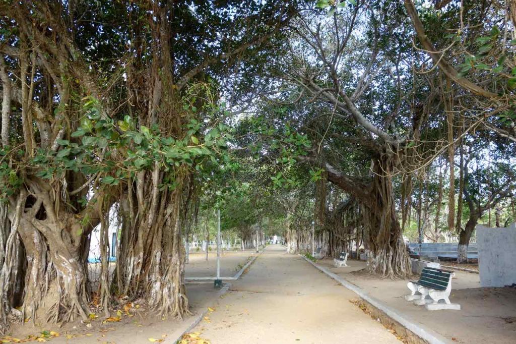 Mosambik, Ilha de Mosambik, Allee zum Fort