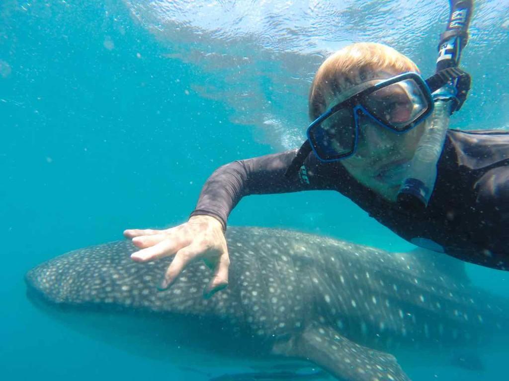 Tofo, Schwimmen mit Walhaien