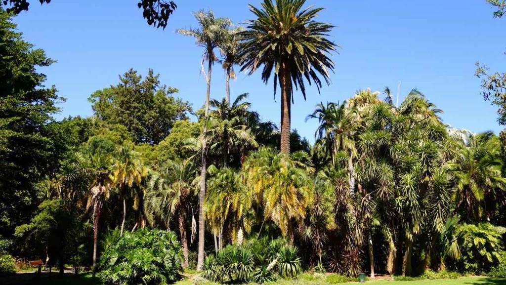 Kapstadt, Companys Garden, Totale