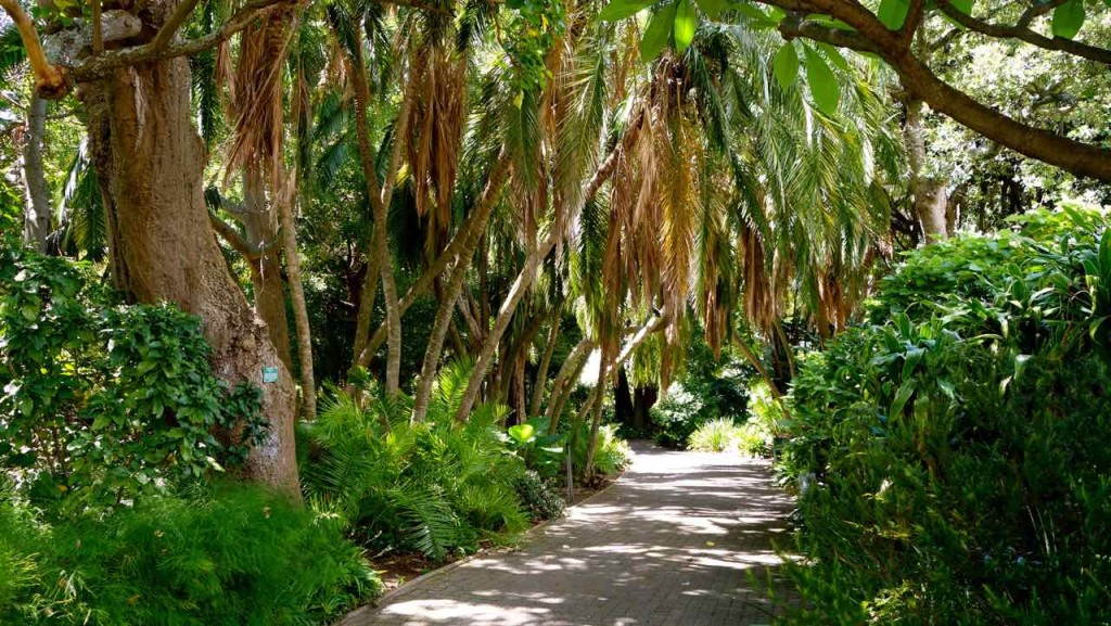 Kapstadt, Companys Garden, Weg mit Palmen