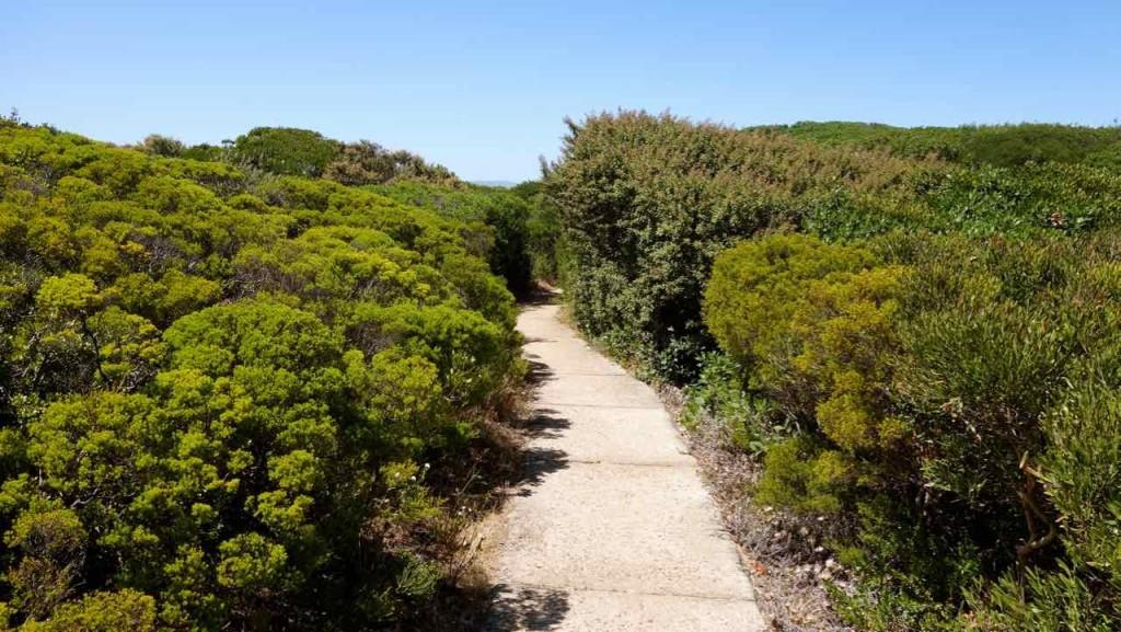 Hermanus Highlights, Cliff Path
