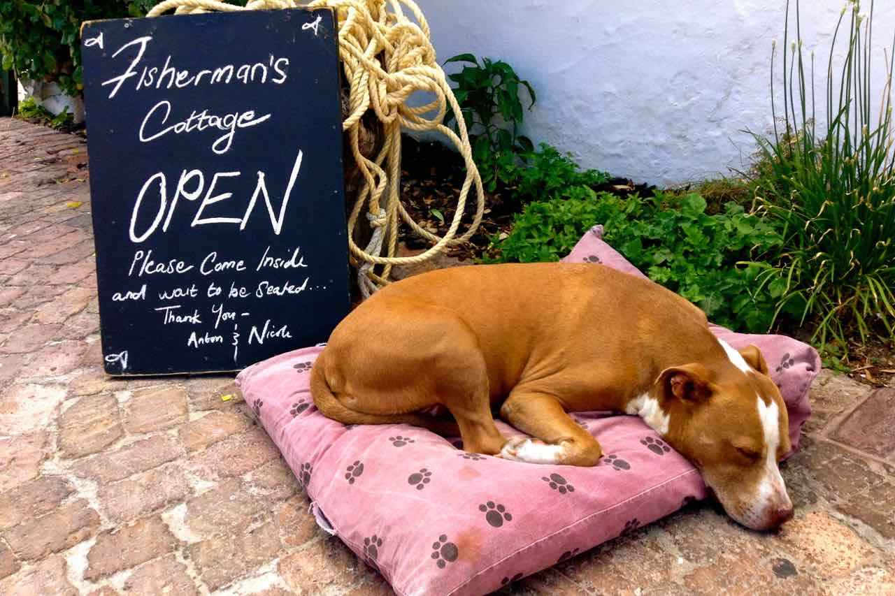 Hermanus, schlafender Hund vor Fishermans Cottage, Beitrgasbild 2