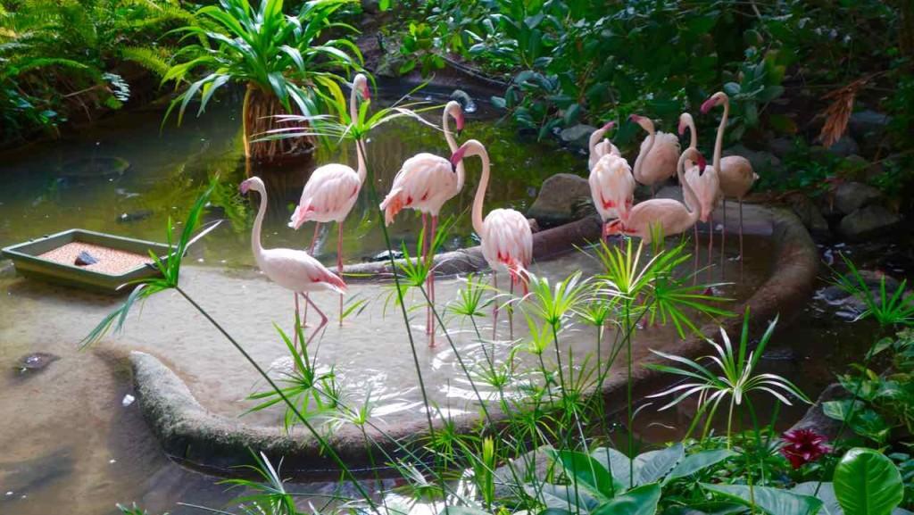 Tropical Islands Brandenburg, Flamingos im Regenwald