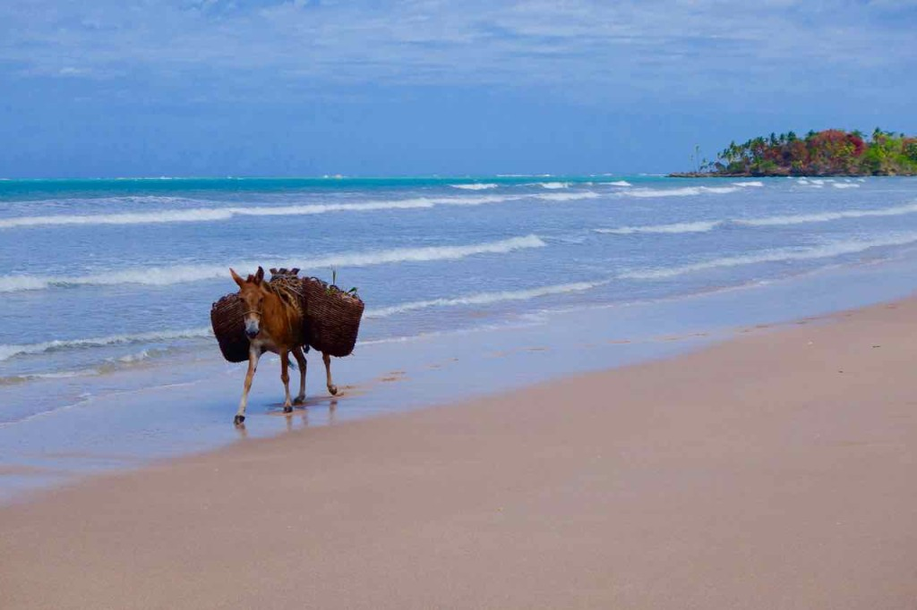 Brasilien Boipeba, Esel am Strand von Boipeba