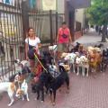 Buenos Aires Hunde, Titelbild