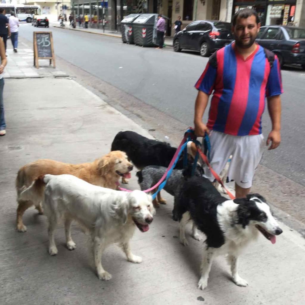 Buenos Aires Hunde mit Paseaperro