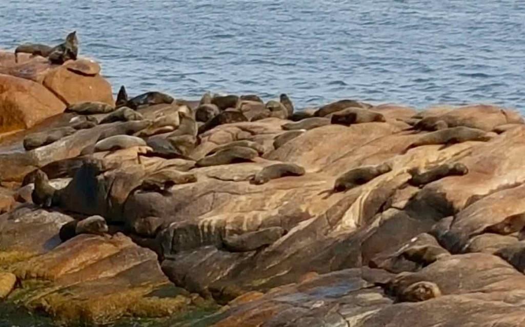 Cabo Polonio Uruguay, Seelöwen, Foto Niels Skovgaard