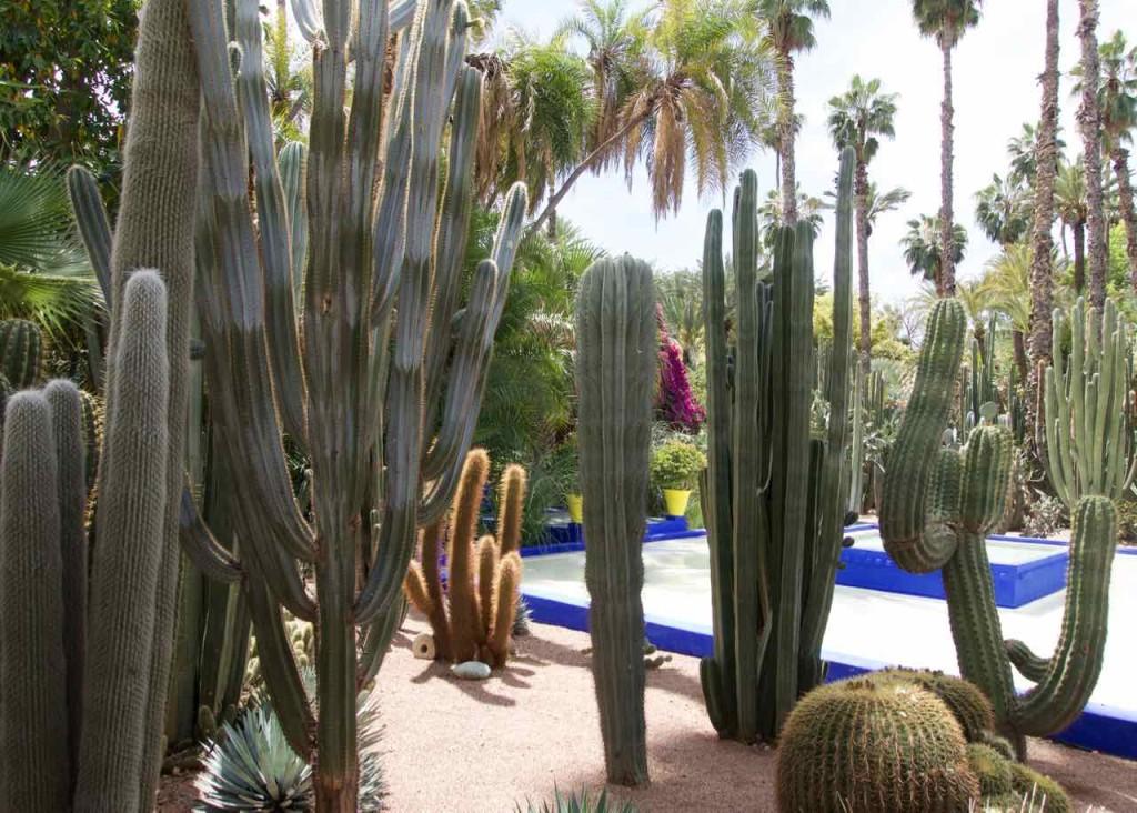 Jardin Majorelle Marrakesch, Garten mit Kakteen