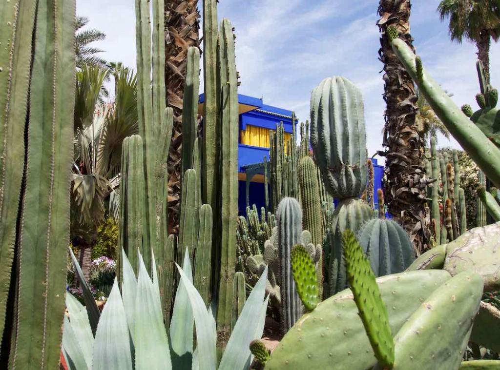 Jardin Majorelle Marrakesch, Haus mit Kakteen