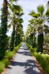 Marrakesch Sehenswürdigkeiten Anima, Palmenallee hochkant