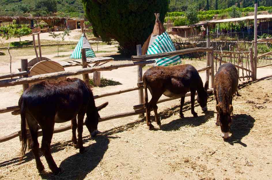 Temps de Terra, Katalonien, Spanien, Esel mit Tipis