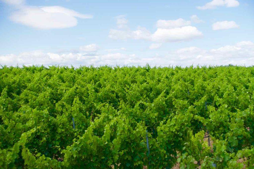 Weinberge im Priorat, Celler La Placeta, Spanien, Katalonien ©PetersTravel.de