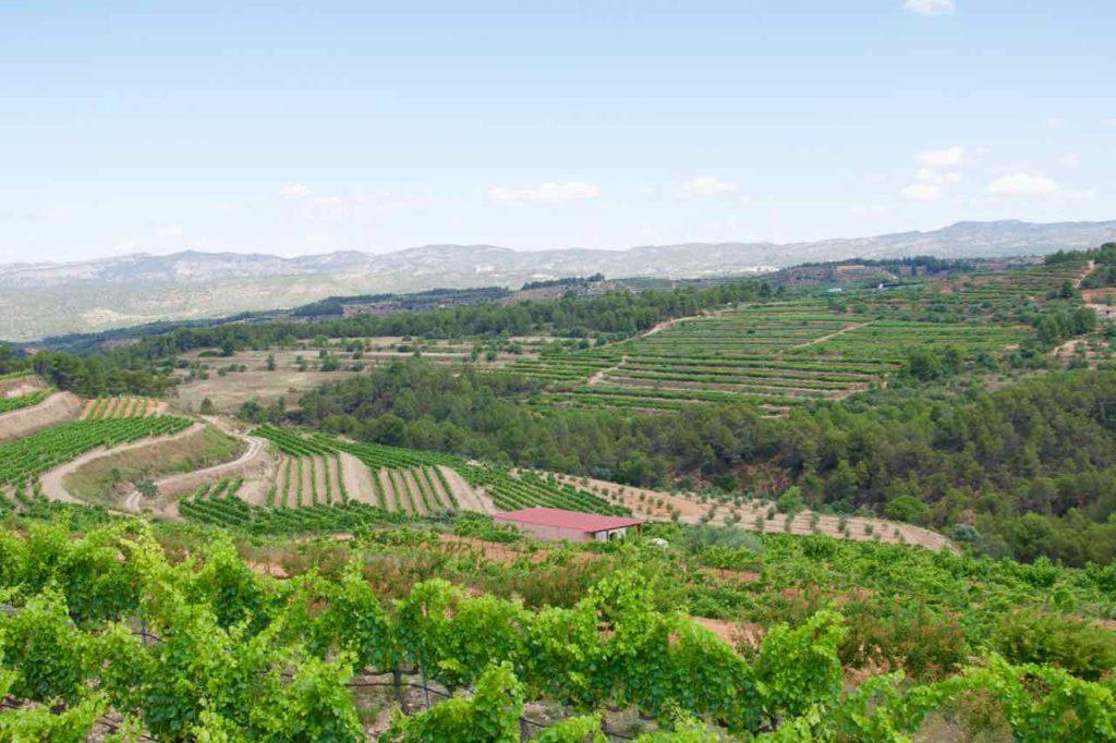 Weinprobe im Priorat, Celler La Placeta im Priorat, Katalonien; Weinberge @PetersTravel.de