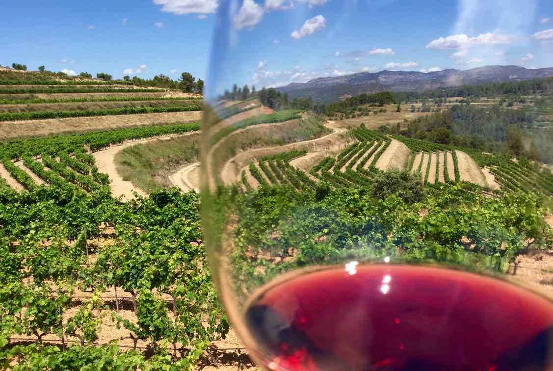 Weinprobe im Priorat, Celler La Placeta im Priorat, Katalonien; Weinberge mit Weinglas @PetersTravel.de