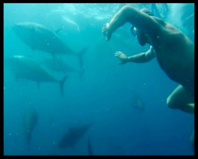 Schwimmen mit Thunfischen in L'Ametlla de Mar Foto: @TunaTours