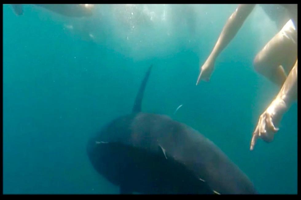 Schwimmen mit Thunfischen in L'Ametlla de Mar @TunaTours, Titelbild
