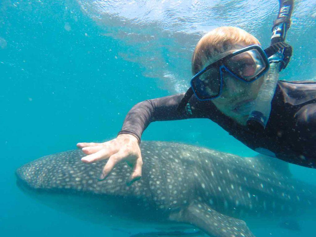 Schwimmen mit Walhaien in Tofo, Mosambik, Foto: @ Marvin Luttermann