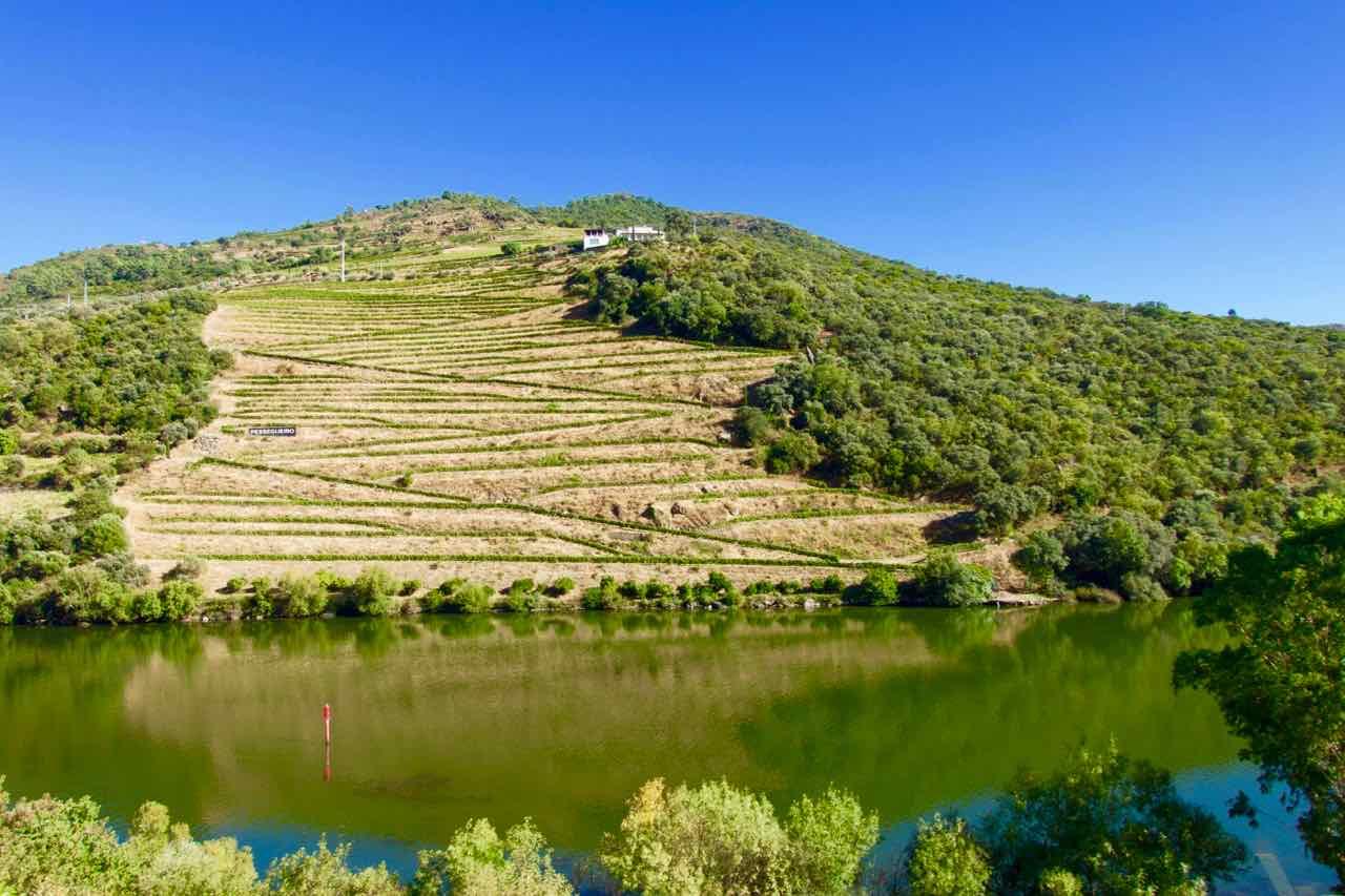 Douro-Tal: Weinberge im September, vom Zug aus gesehen... © PetersTravel
