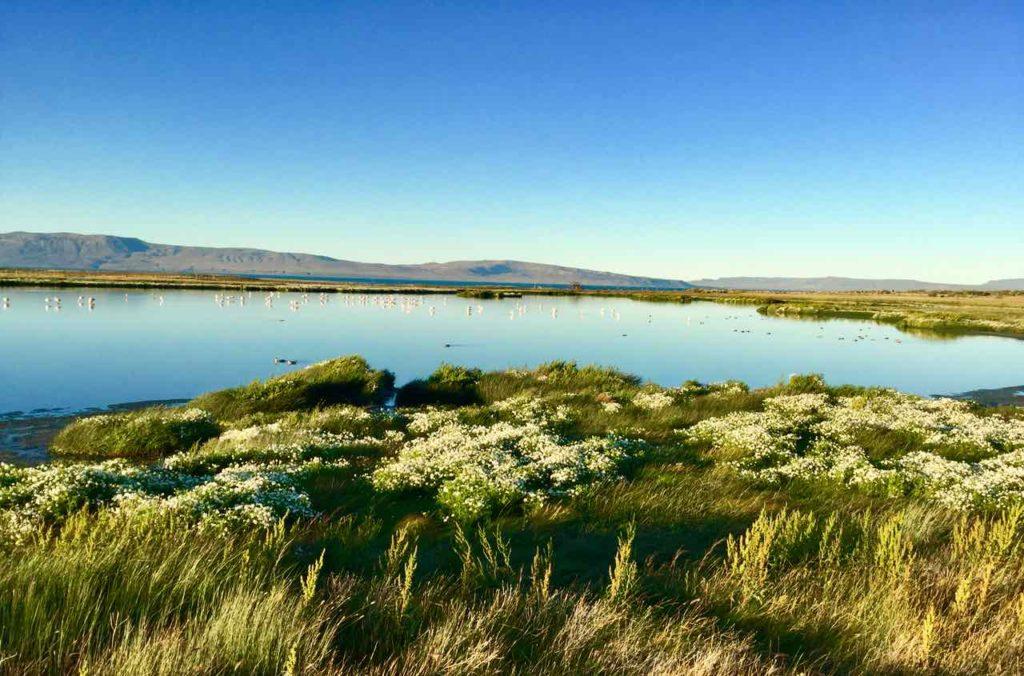 El Calafate Patagonien, Argentinien Lagune Nimez