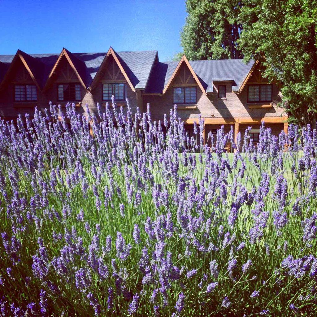 El Calafate Patagonien, Hotel mit Lavendel ©PetersTravel