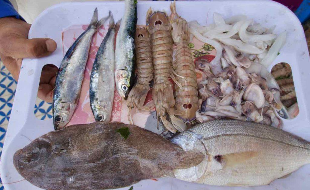 Essaouira Tipps, Die schönsten Restaurants: Fischrestaurants am Hafen: .... Mein Mahl vor der Zubereitung