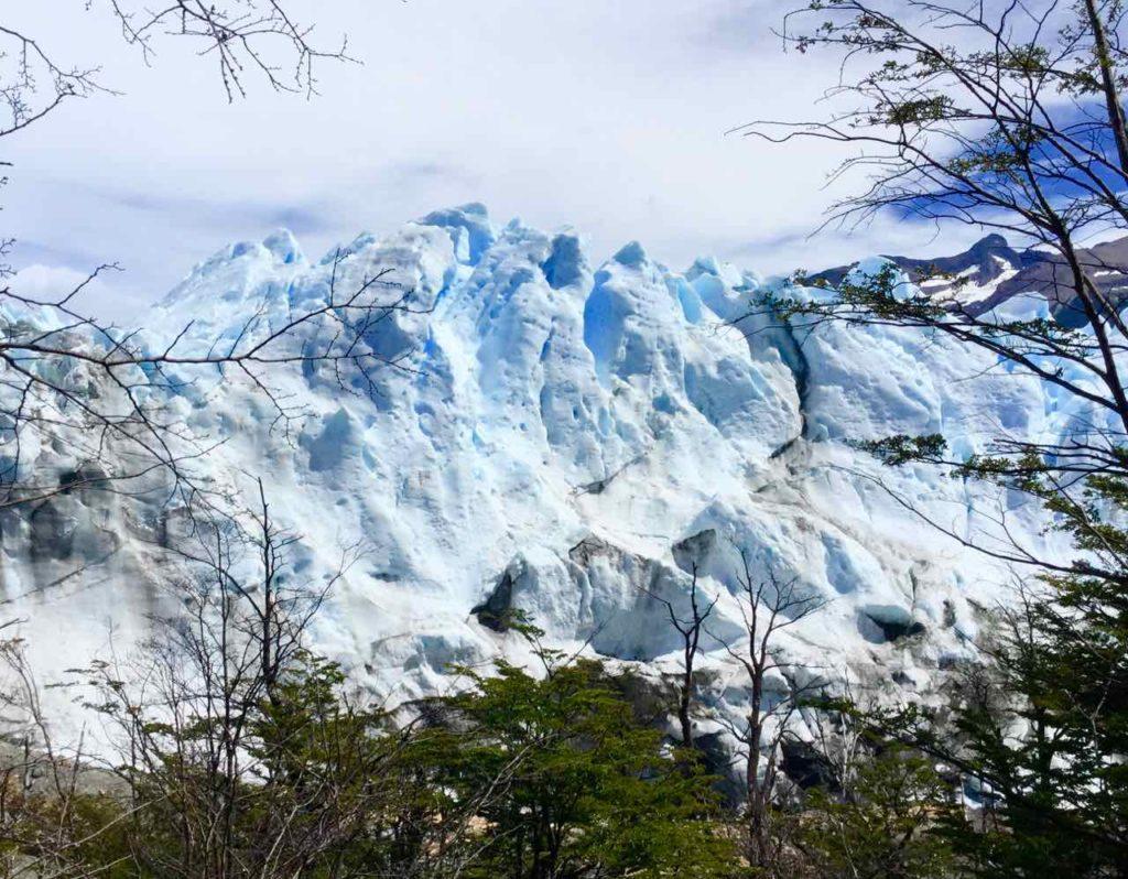 Perito Moreno Gletscher Patagonien Argentinien. Durch Bäume gesehen