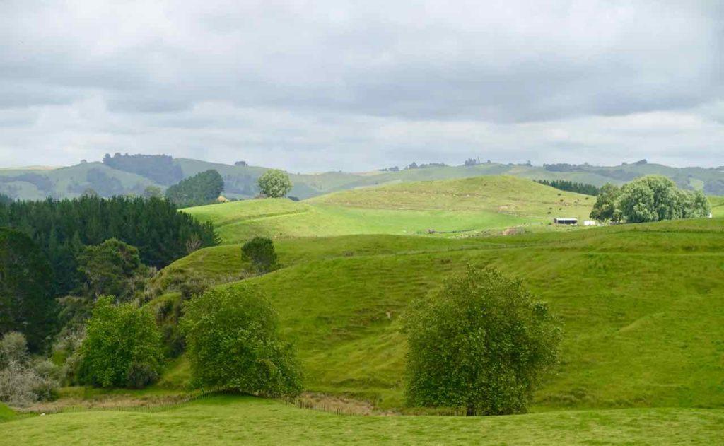 Hobbingen / Hobbiton, Landschaft Neuseeland ©petersTravel