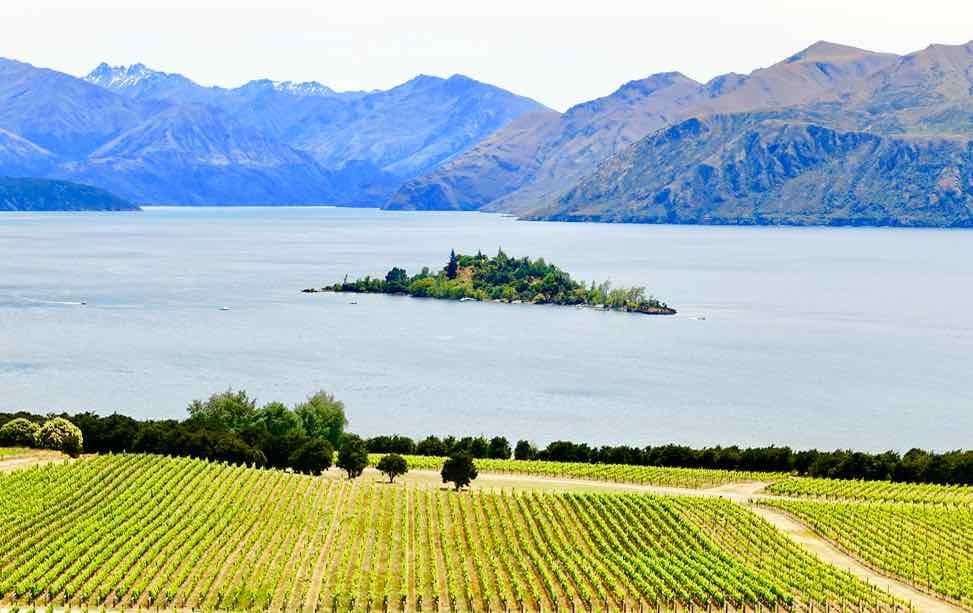Wanaka Tipps zu Sehenswürdigkeiten: Weingut Rippon mit Lake Wanaka, ©PetersTravel