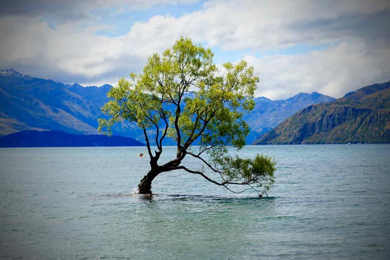 Wanaka Sehenswürdigkeiten The Wanaka Tree ©PetersTravel