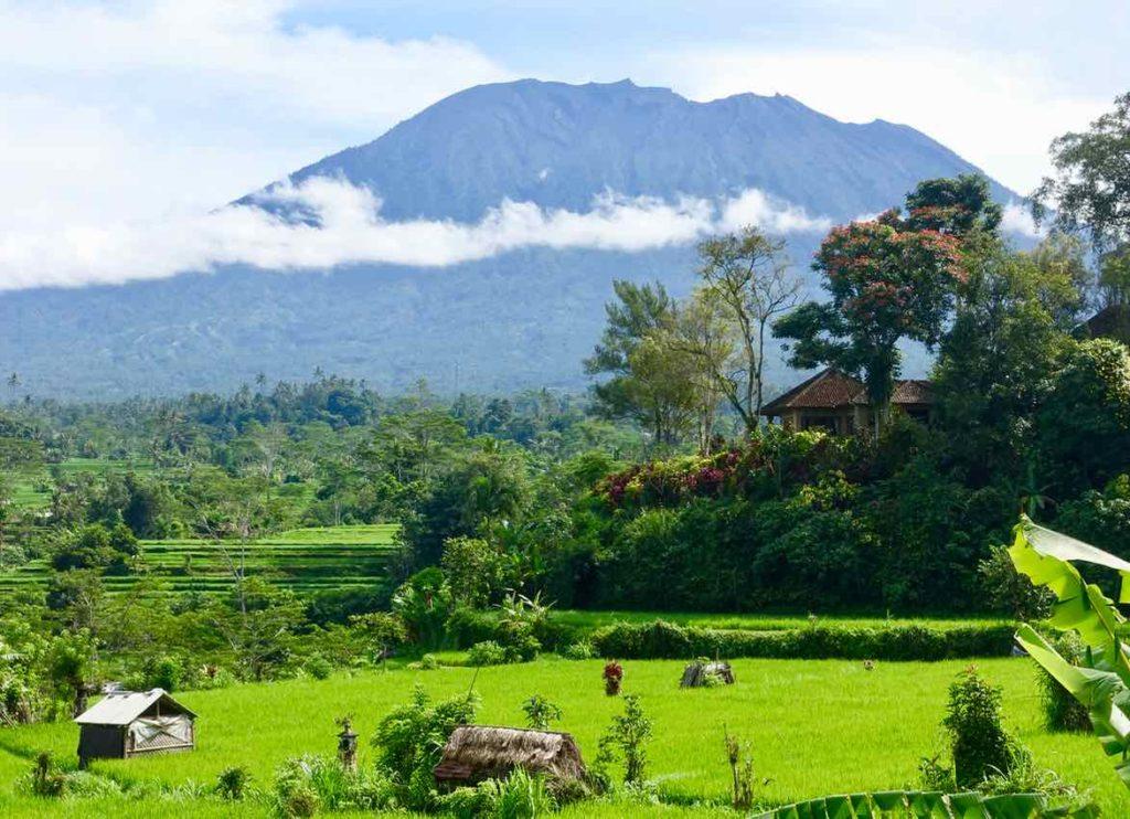 Reisterrassen auf Bali: Reisfelder in Sidemen ©PetersTravel