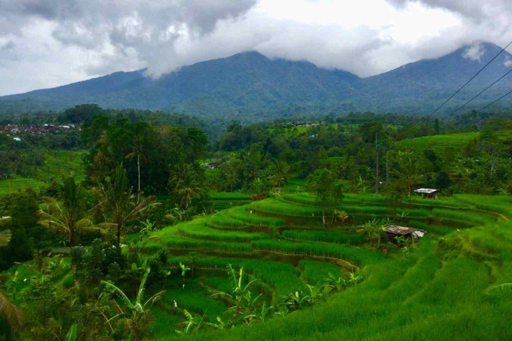 Bali Reisterrassen: Jatiluwih (Titelbild) ©PetersTravel