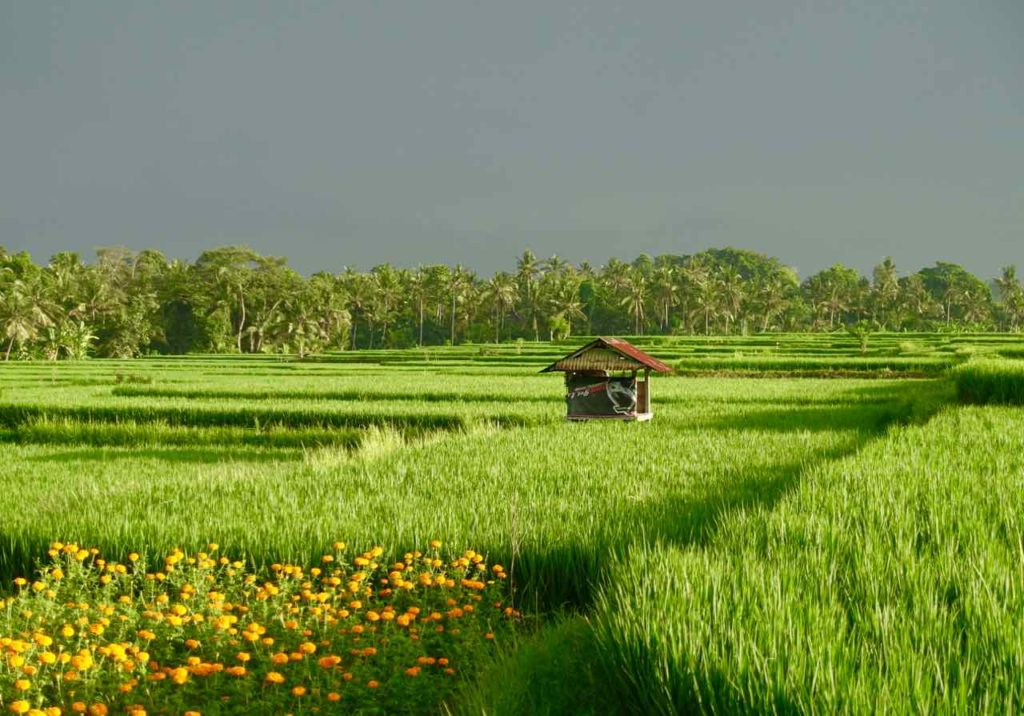 Reisterrassen auf Bali: Mein morgendlicher Ausblick von den Harmony Villas in Lodtunduh ©PetersTravel