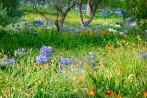 Barcelona Tipps und Sehenswürdigkeiten: Blühender Park Güell, Copyright PetersTravel