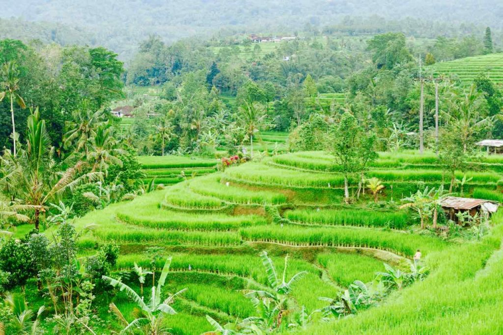 Bali Reisterrassen: Jatiluwih Copyright PetersTravel