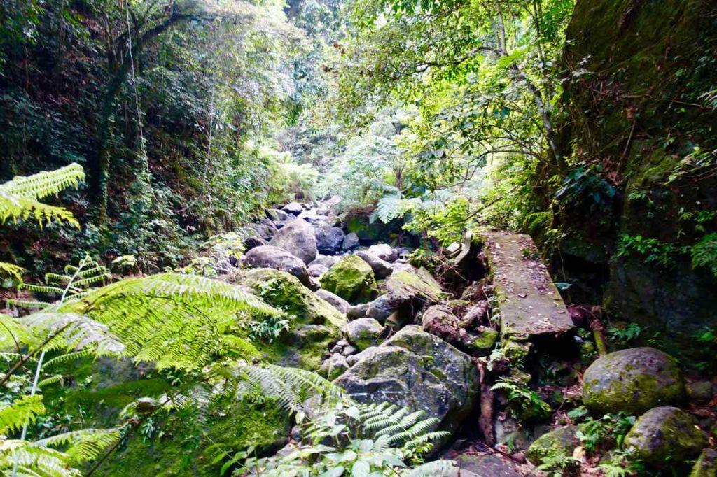 Dumaguete Highlights, Unterwegs zum Casaroro Falls. Rechts im Bild die Überreste des Weges
