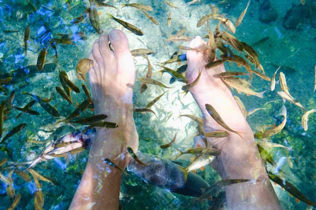 Siquijor Island, Doktorfische beim Old Enchanted Balete Tree Copyright Peter Pohle PetersTravel