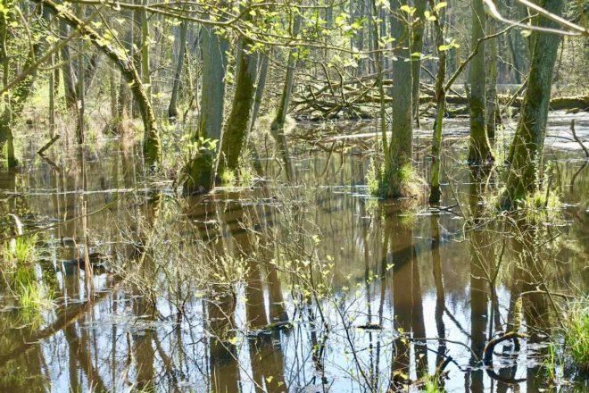 Usedom, Heringsdorf, Insel-Safari durch Wald Feuchtgebiet