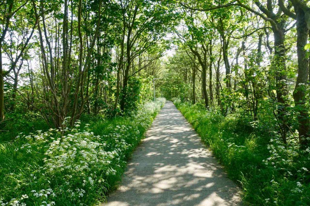 Urlaub auf Texel: Radweg zum Paal 9 bei Den Hoorn auf Texel