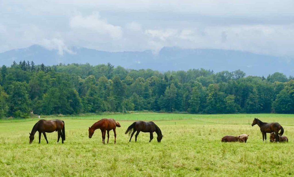 Chiemsee: Herreninsel / Herrenchiemsee Idyll mit Pferden