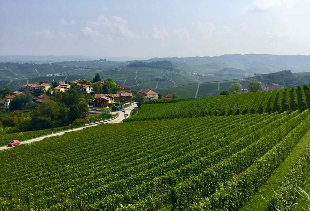 Weinberge bei Barolo im Piemont, Foto Peter Pohle PetersTravel