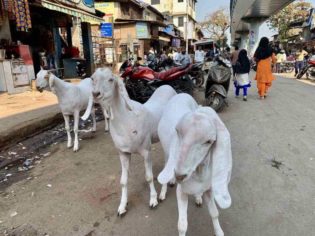 Ziegen im Dharavi Slum Copyright Peter Pohle PetersTravel
