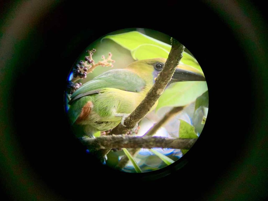Costa Rica: Birdwatching im Nationalpark Monteverde